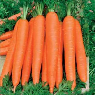 Морковь Осенний король Седек изображение 4