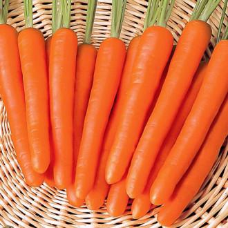 Морковь Рыжая невеста Premium Seeds изображение 2