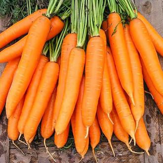 Морковь Степашка F1 Premium Seeds изображение 1