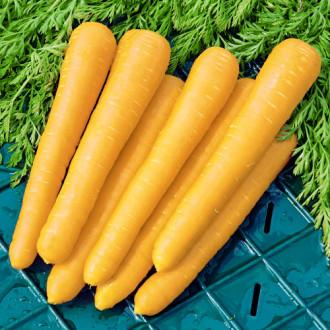 Морковь Золотистый плов Premium Seeds изображение 7