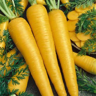 Морковь Золотой кролик Premium Seeds изображение 3