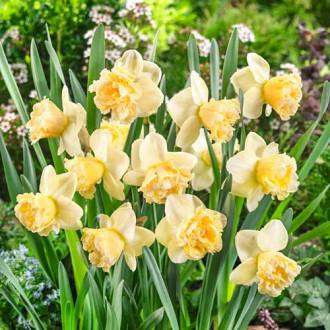 Нарцисс крупноцветковый Арт Дизайн изображение 4