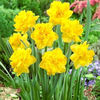 Нарцисс махровый Дабл Голд Медал изображение 3