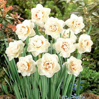 Нарцисс махровый Флауэр Парад изображение 6