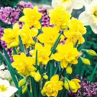 Нарцисс махровый Голден Дукат изображение 3