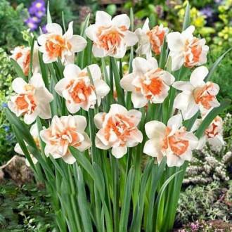 Нарцисс махровый Реплит изображение 7