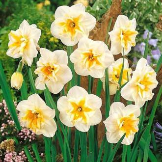 Нарцисс сплит-корона Дельта изображение 6