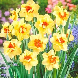 Нарцисс махровый Дабл Фэшн изображение 4