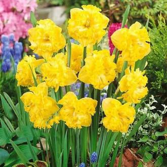 Нарцисс сплит-корона Флайер изображение 5