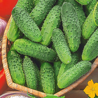 Огурец Капитан Засолкин F1 Premium Seeds изображение 6