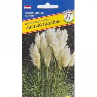 Пампасная трава Белый шлейф Престиж изображение 1