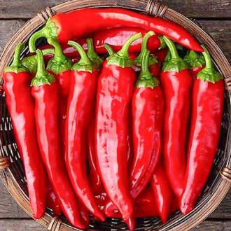 Перец острый Моя теща Premium Seeds изображение 7