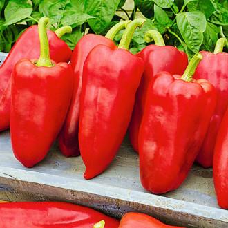 Перец сладкий Холодок F1 Premium Seeds изображение 4