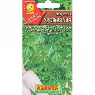 Петрушка корневая Урожайная Гавриш изображение 5
