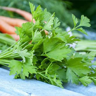 Петрушка листовая Витаминка Premium Seeds изображение 4