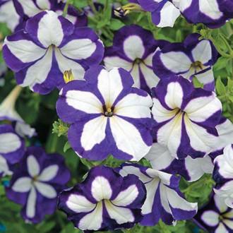 Петуния Лавина Синий звездопад F1 Premium Seeds изображение 5