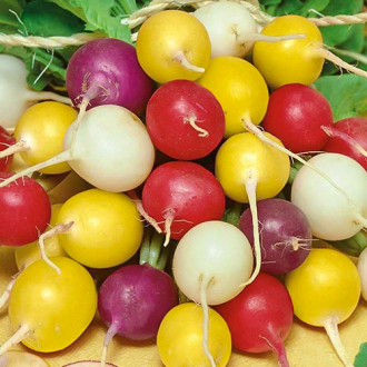 Редис Черешневый сад, смесь сортов Premium Seeds изображение 3
