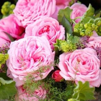 Роза флорибунда Саммер Романс изображение 8