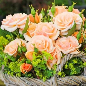 Роза флорибунда Свит Хоней изображение 8