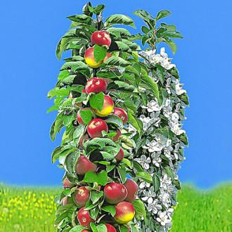 Яблоня колоновидная ранняя изображение 1