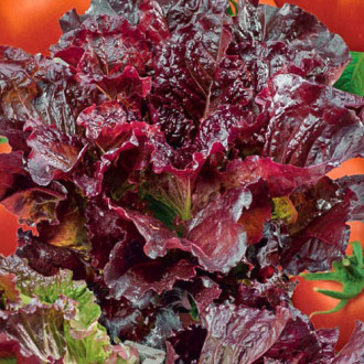 Салат листовой Гранатовый сок Premium Seeds изображение 1