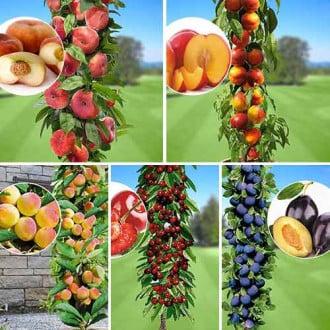 Суперпредложение! Комплект колоновидных деревьев Любимые фрукты из 5 саженцев изображение 7