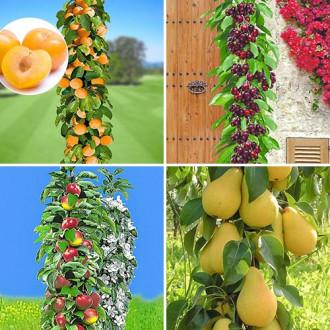 Суперпредложение! Комплект колоновидных деревьев Покорение Сибири из 4 саженцев изображение 5