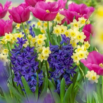 Суперпредложение! Комплект нарциссов, тюльпанов, гиацинтов из 20-ти луковиц изображение 5