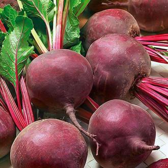 Свекла столовая Мулатка Premium Seeds изображение 7