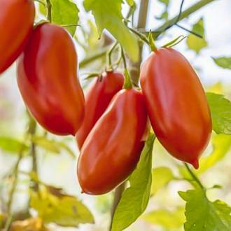 Томат Черри Шоколадные пальчики F1 Premium Seeds изображение 3