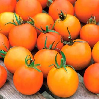 Томат Жемчужина оранжевая Седек изображение 8