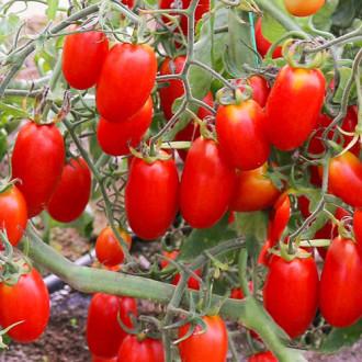 Томат Королевские сливки Premium Seeds изображение 3