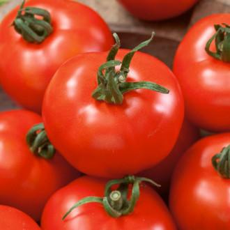 Томат Лакомство королей F1 Premium Seeds изображение 5