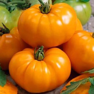 Томат Оранжевый гигант Седек изображение 5
