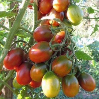 Томат Шоколадные груши F1 Premium Seeds изображение 8