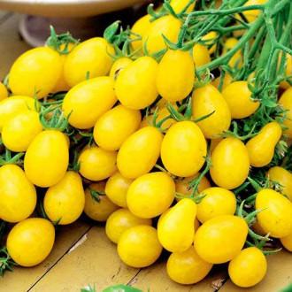 Томат Сладкая гроздь золотая Седек изображение 2