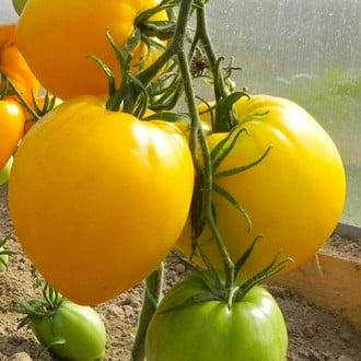 Томат Золотая буденовка F1 Premium Seeds изображение 1