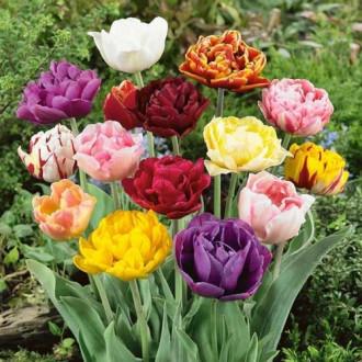 Тюльпан махровый Лейт, микс изображение 5