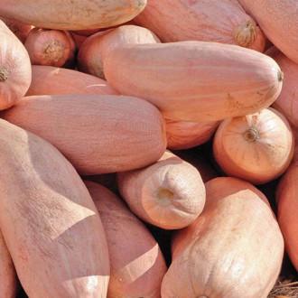 Тыква Румяная папайя Premium Seeds изображение 5