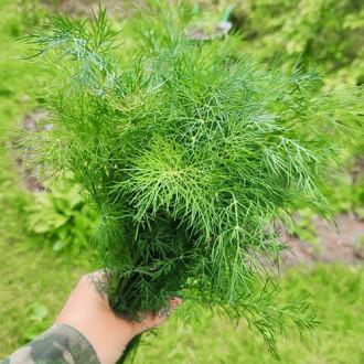 Укроп Пушистый кедр Premium Seeds изображение 2