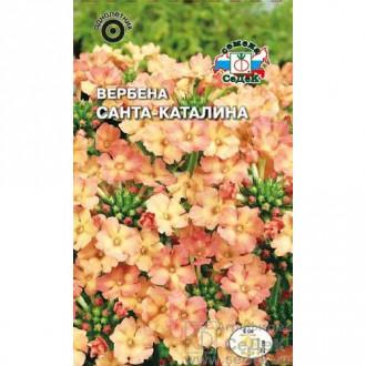 Вербена Санта-Каталина Седек изображение 7