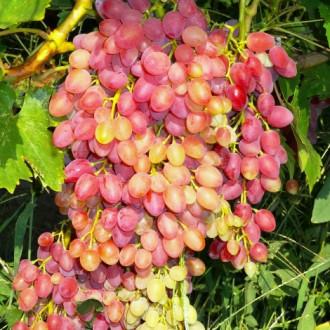 Виноград кишмиш красный изображение 7