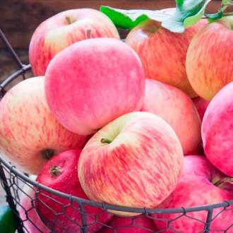 Яблоня Налив розовый изображение 7