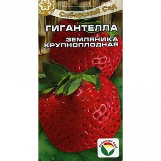 Земляника крупноплодная Гигантелла Сибирский сад изображение 7