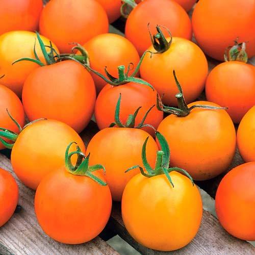 Томат Жемчужина оранжевая Седек изображение 1 артикул 71690