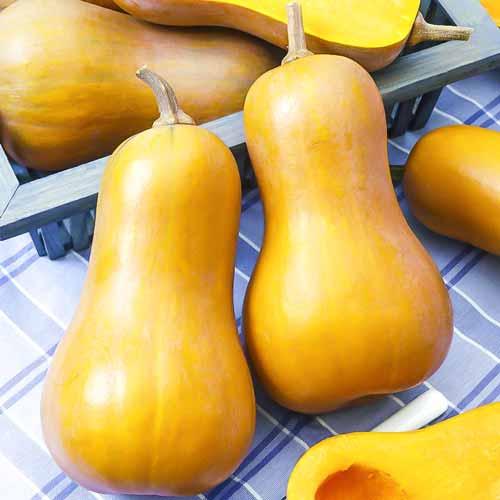 Тыква порционная Ореховое масло изображение 1 артикул 74039
