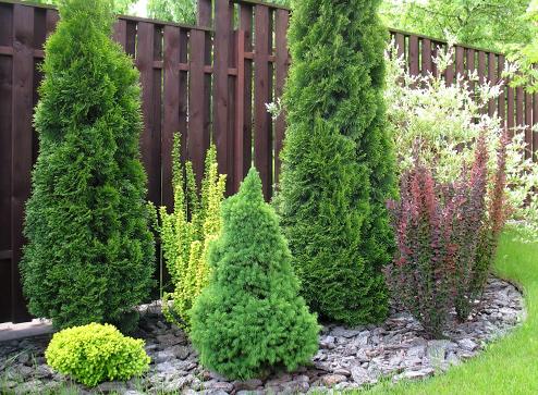 Каталог - -20% на хвойные растения - Bekker.kz Казахстан