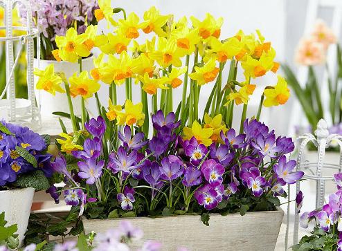Каталог - -50% на прекрасные, нарядные тюльпаны - Bekker.kz Казахстан